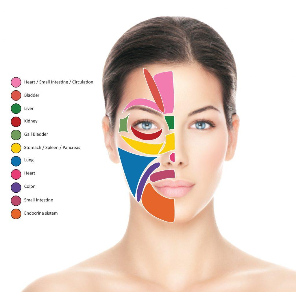 Прыщи на лице за какие органы отвечают: подробное описание фото