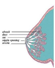 Происхождение прыщей на груди и вокруг сосков